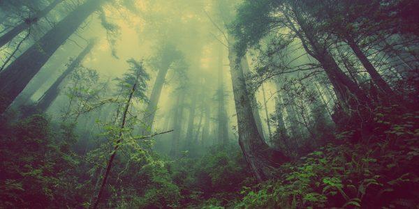 baños del bosque